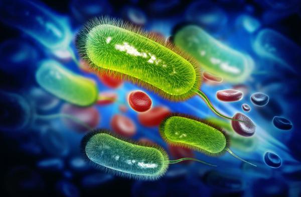 Obrazek ilustrujący drobnoustroje w układzie krwionośnym.
