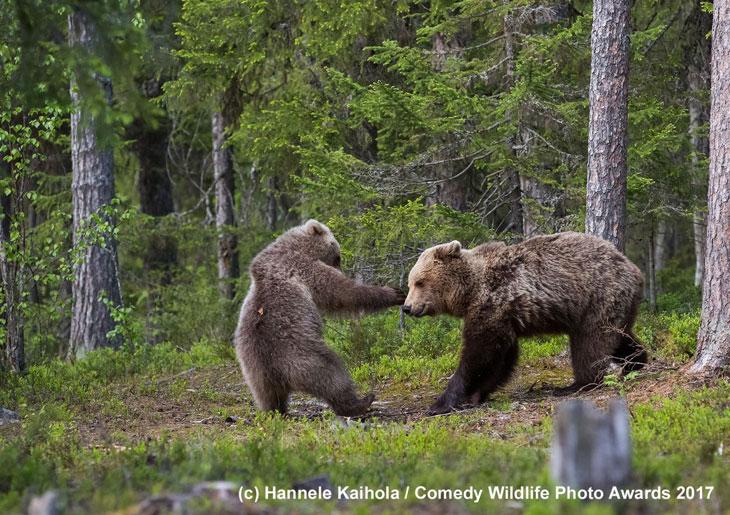 Bawiące się niedźwiadki