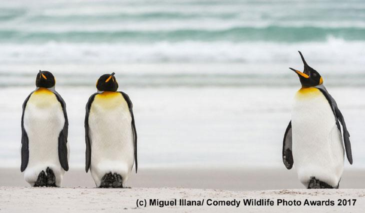 Obrażone pingwiny