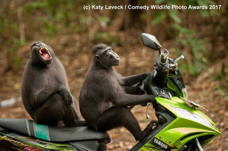 Zmotoryzowane małpy
