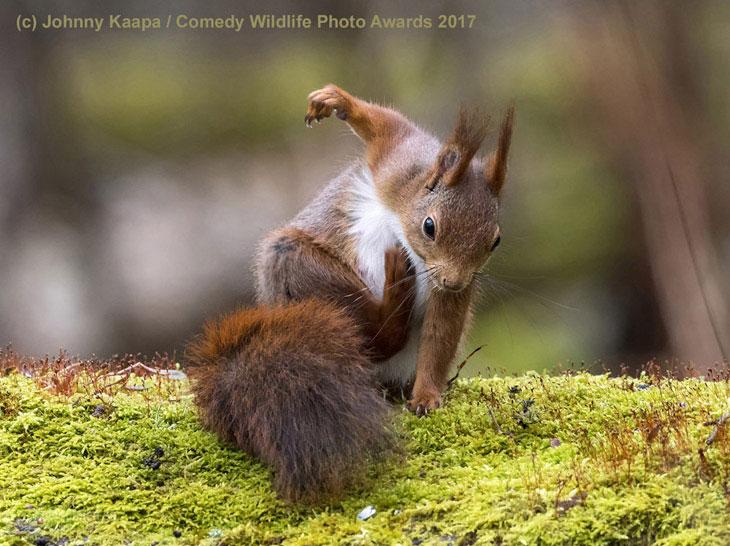 Potężna wiewiórka