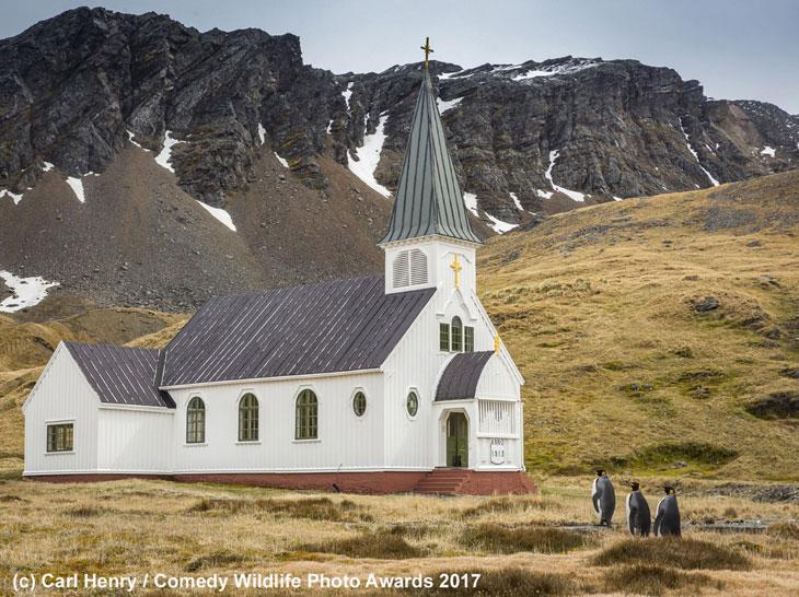 Pingwinów niedzielne do kościoła wyjście