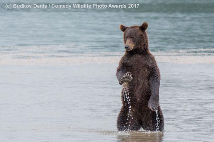 Odmawiający niedźwiedź
