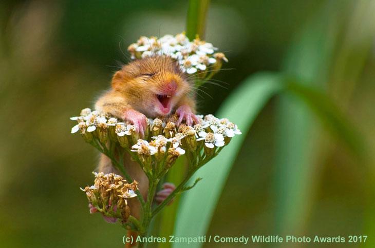 Ucieszony mały gryzoń