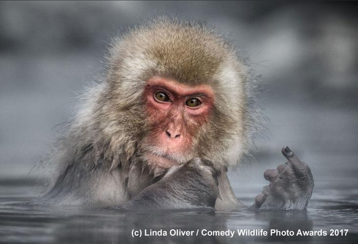 Nieprzyjazna małpka