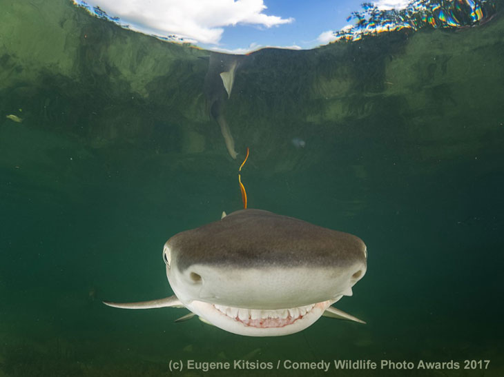 Uśmiech rekina