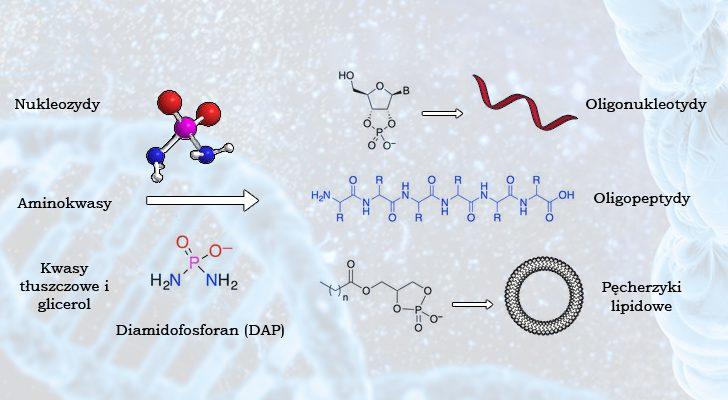 Obrazek przedstawia schemat trzech reakcji chemicznych. Z nukleozydów powstają oligonukleotydy, z aminokwasów oligopeptydy, a z kwasów tłuszczowych i glicerolu pęcherzyki lipidowe. W każdej uczestniczy DAP w roli enzymu.