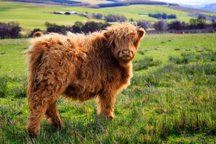 44255-animais-cabeludos-peludos-com-muit