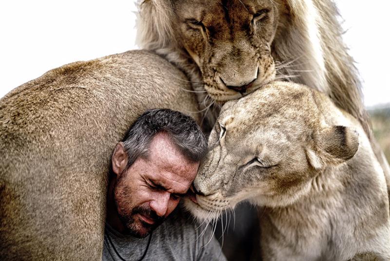 Ten człowiek stał się częścią lwiej rodziny