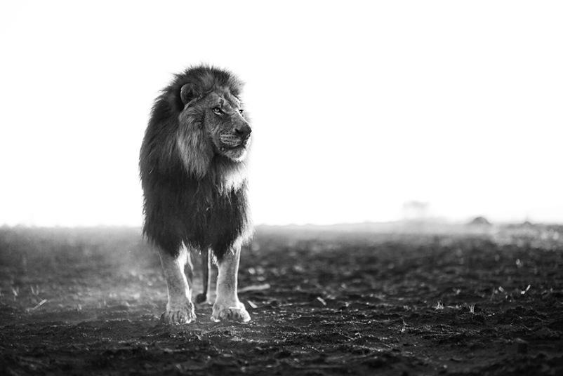Kevin Richardson - Ciekawe.org - Zaklinacz Lwów