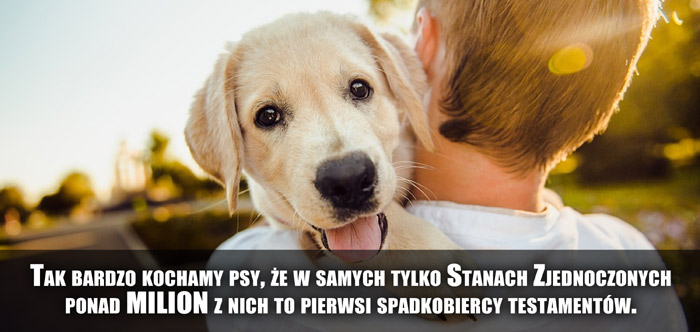 Tak bardzo kochamy psy, że w samych tylko Stanach Zjednoczonych ponad milion z nich to pierwsi spadkobiercy testamentów.
