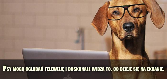 Psy mogą oglądać telewizję i doskonale widzą to, co dzieje się na ekranie.
