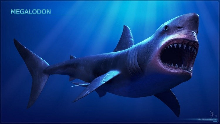 megalodon shark size - HD1800×1200