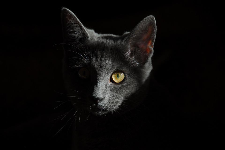 6 nieoczywistych ciekawostek na temat kotów
