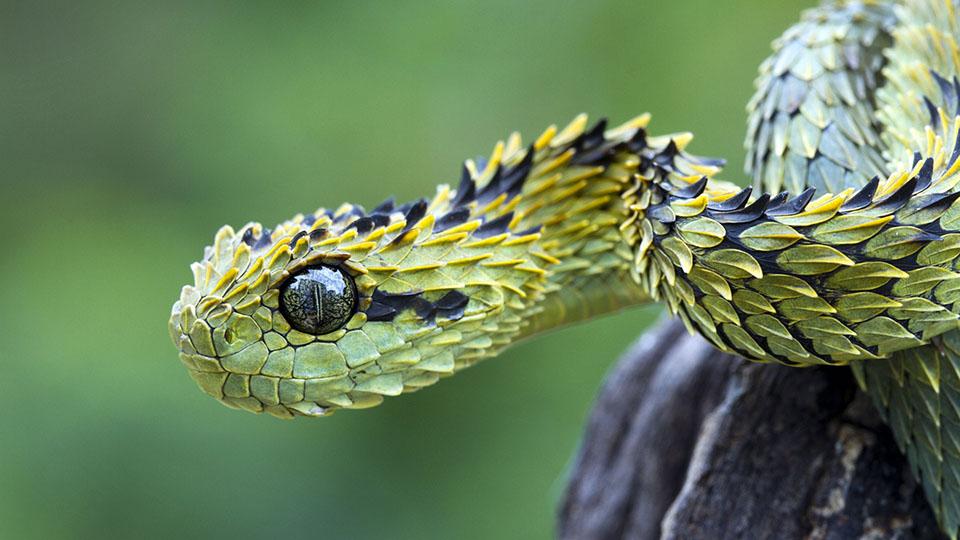 5 nieoczywistych ciekawostek o wężach