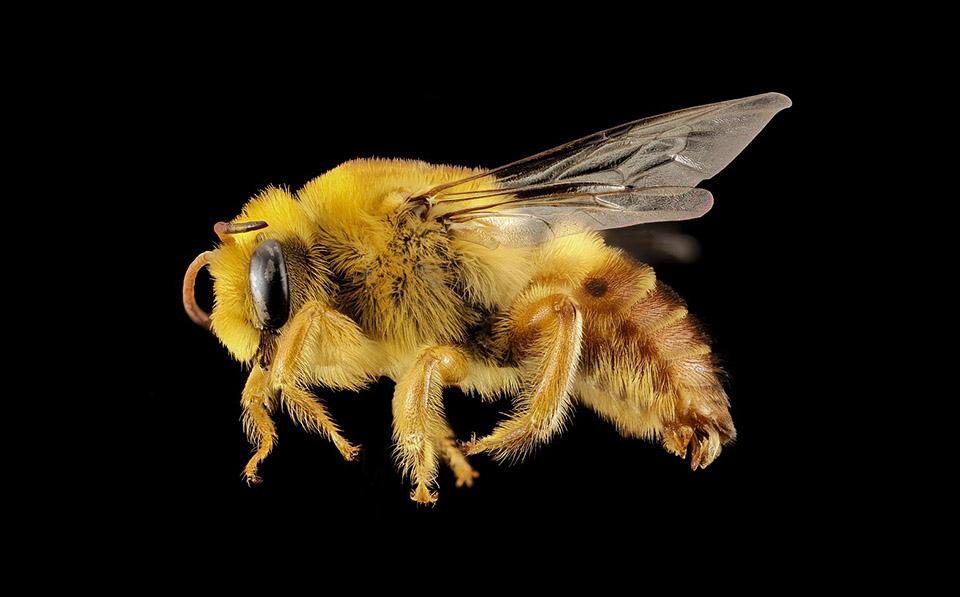5 nieoczywistych ciekawostek na temat pszczół