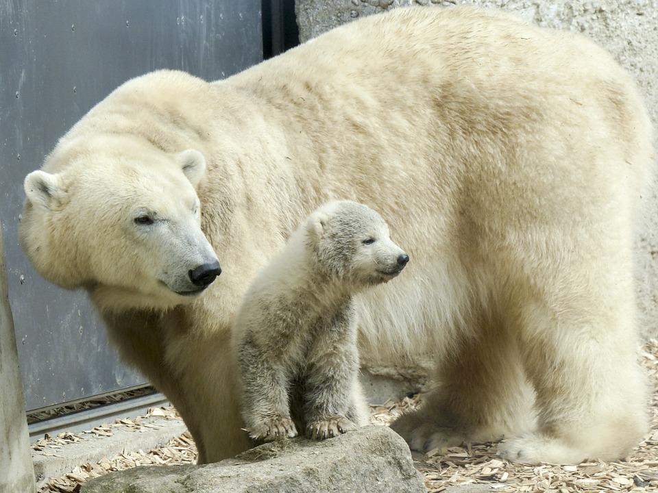 5 nieoczywistych ciekawostek na temat niedźwiedzi