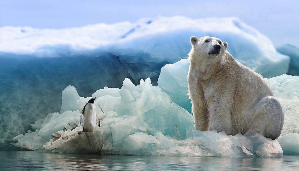 Niedźwiedź polarny i pingwin