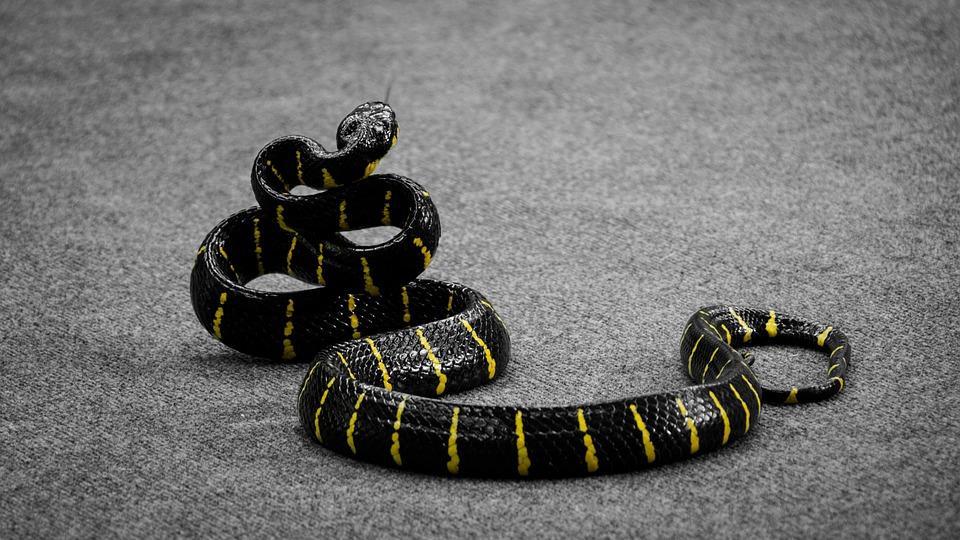 wąż, węże, ciekawostki, ciekawe.org