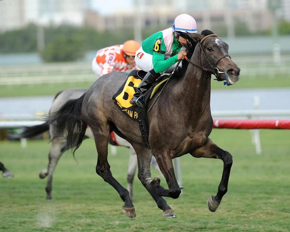 Najszybszy koń świata - Winning Brew - ciekawostki na temat koni na Ciekawe.org