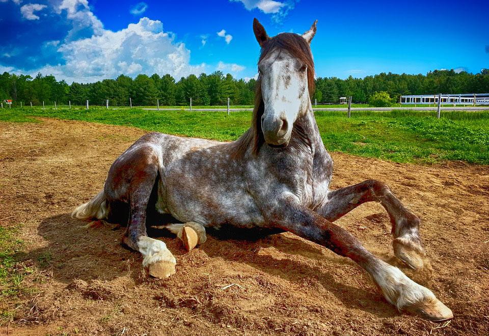 Ciekawe org ciekawostki na temat koni