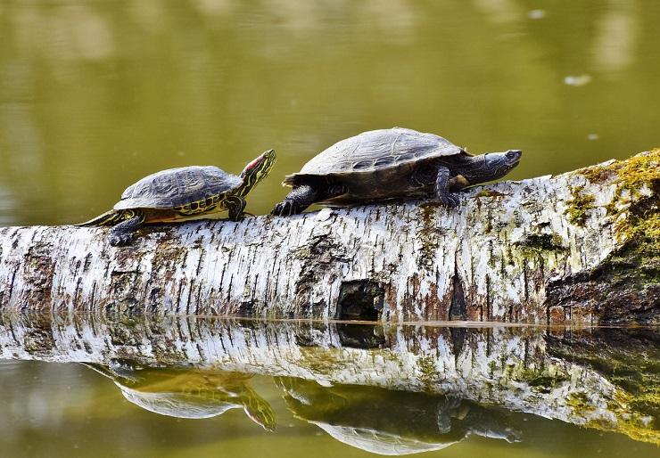 5 nieoczywistych ciekawostek o żółwiach