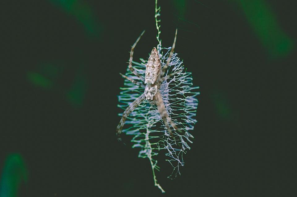 5 nieoczywistych ciekawostek o pająkach