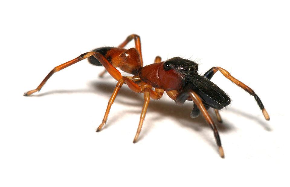 Pająk, pająki, pajęczaki, sieci pajęcze i pajęczyny - ciekawostki o zwierzętach na ciekawe.org