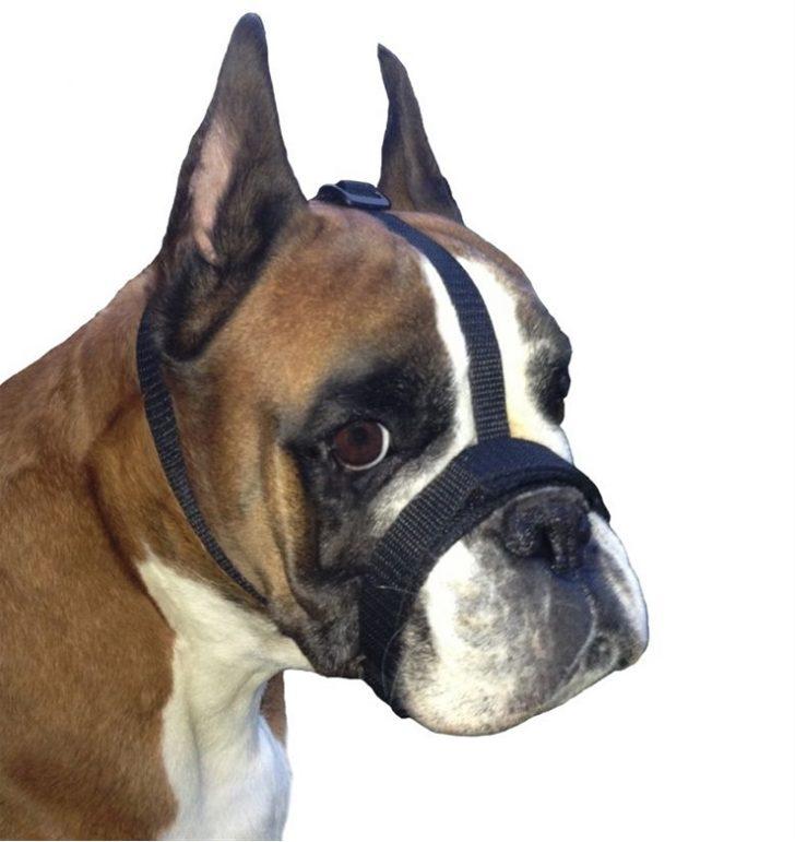 czy-pies-musi-miec-kaganiec