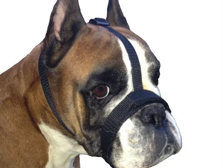 Czy pies musi mieć kaganiec?