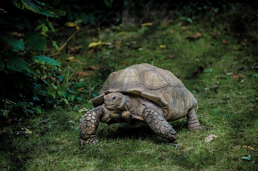 Żółw, żółwie, ciekawostki na Ciekawe.org
