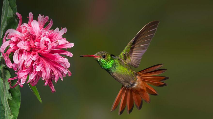 19 rzeczy, które musisz wiedzieć o kolibrach
