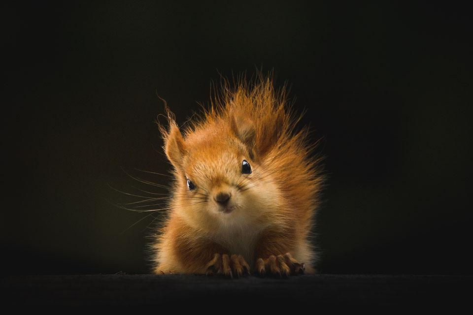 5 nieoczywistych ciekawostek na temat wiewiórek