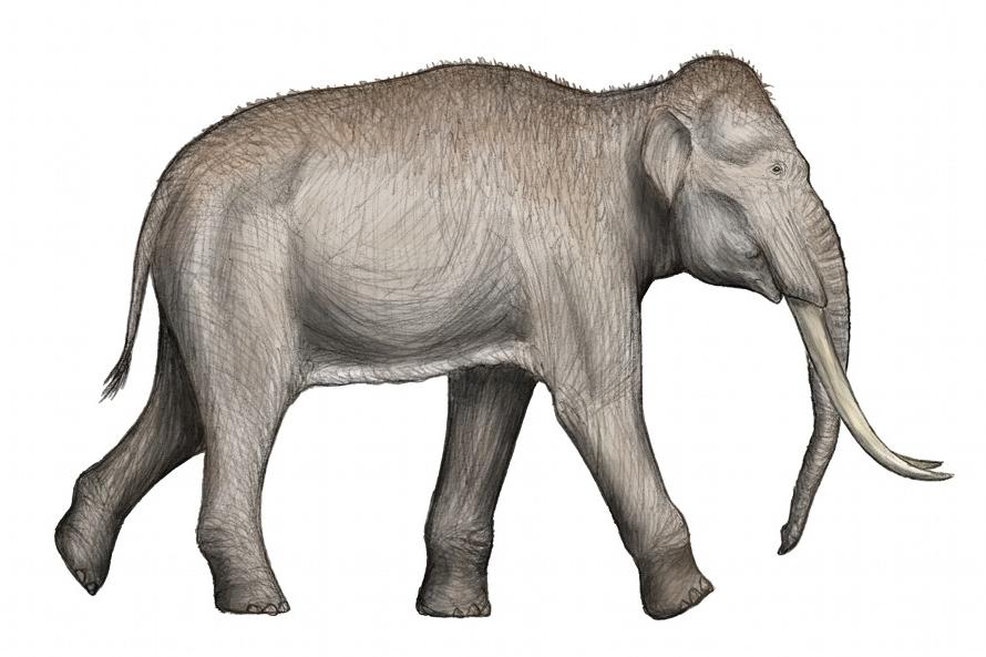 Mamut, słoń, metro - W warszawskim metrze znaleziono szkielet mamuta lub słonia leśnego! Ciekawe fakty na ciekawe.org.
