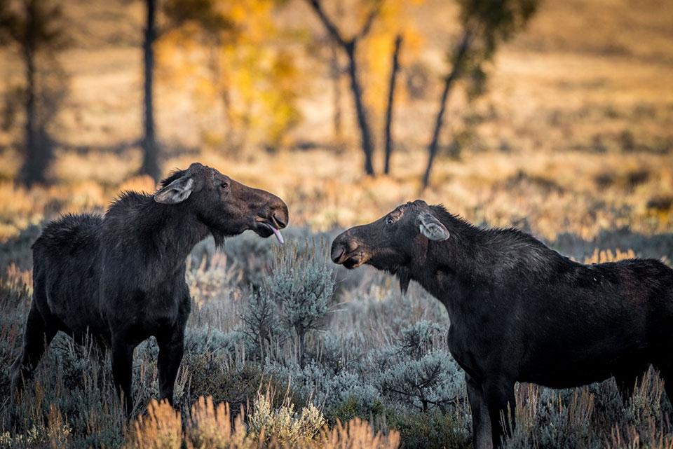 Najzabawniejsze zdjęcia dzikiej przyrody - zwycięzcy konkursu 2018