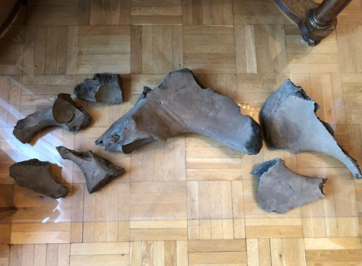W warszawskim metrze znaleziono szkielet mamuta lub słonia leśnego! Ciekawe fakty na ciekawe.org.