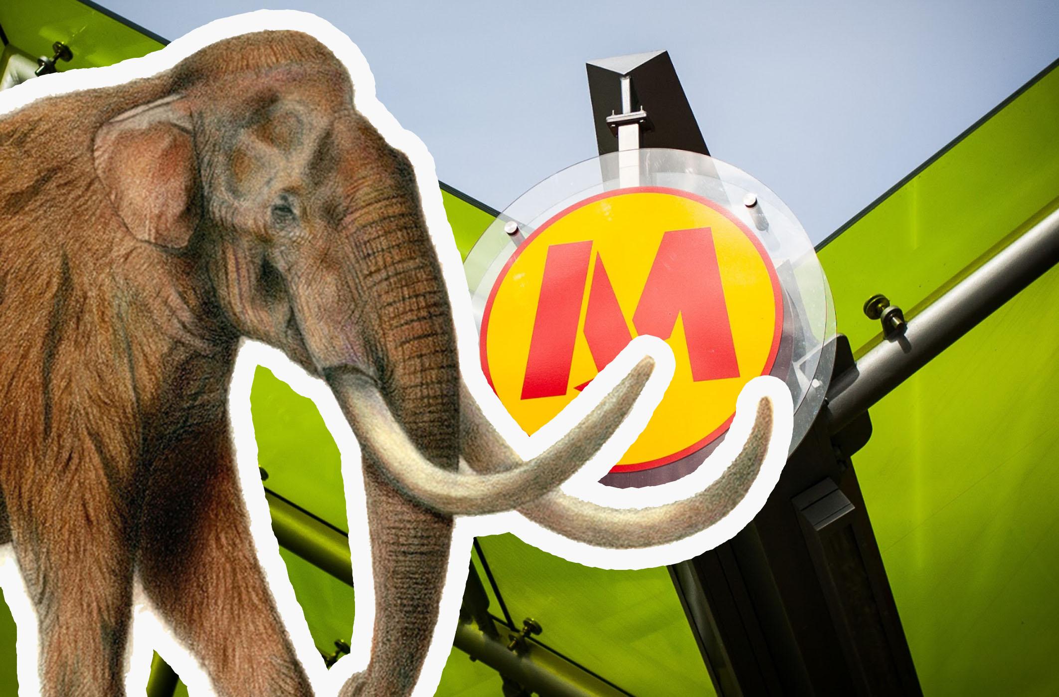 Odkryto kości mamuta lub słonia leśnego podczas budowy metra w Warszawie