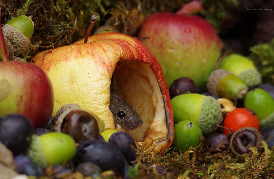 Wioseczka myszy - zdjęcia Simon Dell. Ciekawe.org
