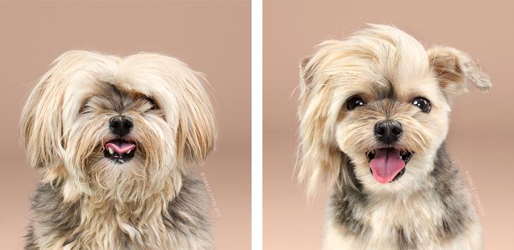 Psy przed i po strzyżeniu, niesamowita metamorfoza psów u fryzjera tylko na Ciekawe.org
