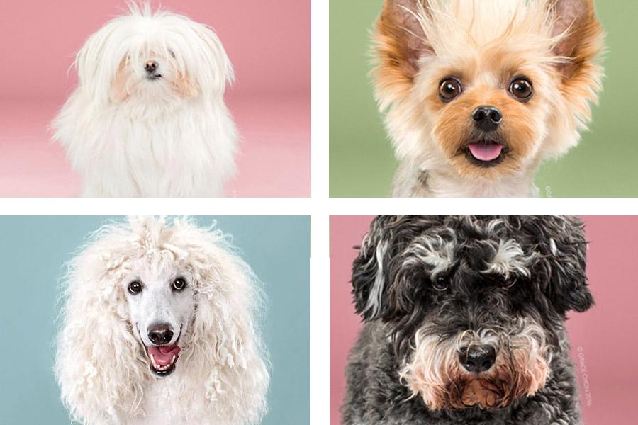 Cudowne portrety psów przed i po wizycie u japońskiego fryzjera