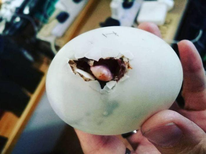 Z jajka może się wykluć najlepszy przyjaciel!