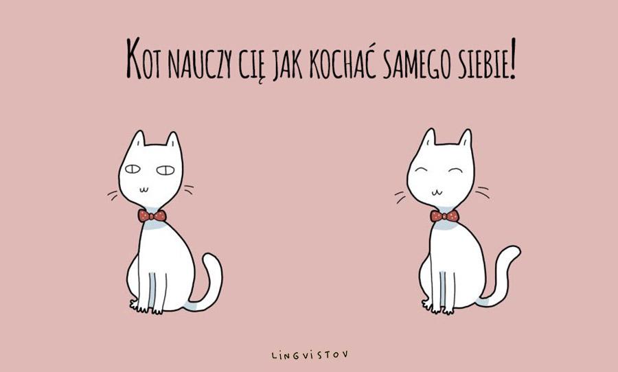 20 zalet posiadania kota - zalety posiadania kota na Ciekawe.org